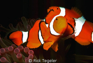 Twin NEMOS. by Rick Tegeler 